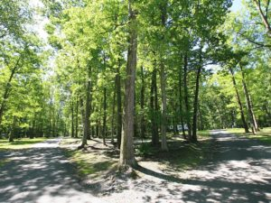 4-campground3-hidden-acres-campground