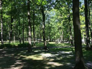 5-campground4-hidden-acres-campground