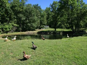 57-pond3-hidden-acres-campground