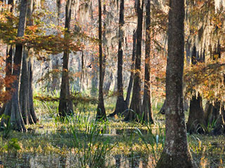 savannah-national-wildlife-refuge